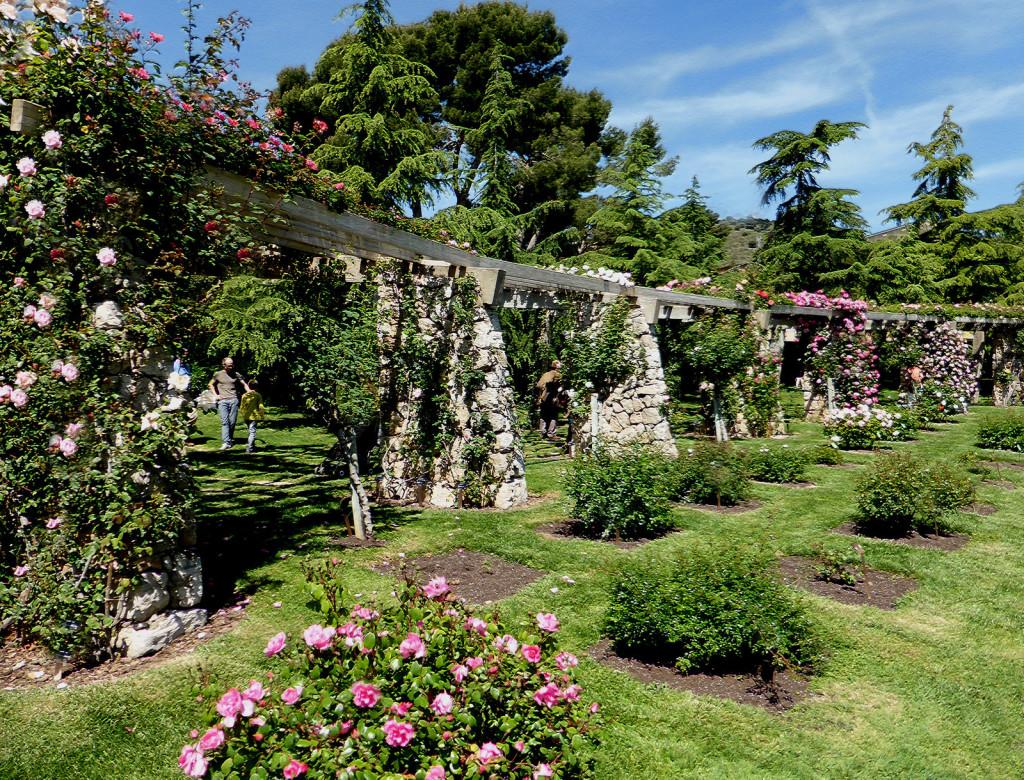 Parc de cervantes un giardino di rose a barcellona for Viaggi per barcellona