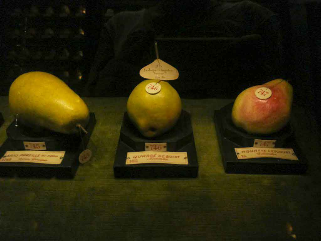 museo della frutta torino