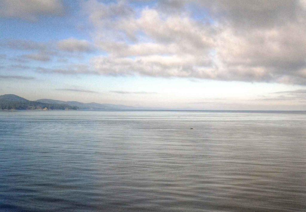 vedere le orche canada