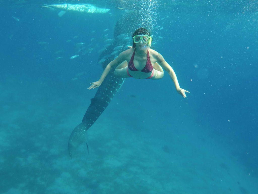 squali balena oslob