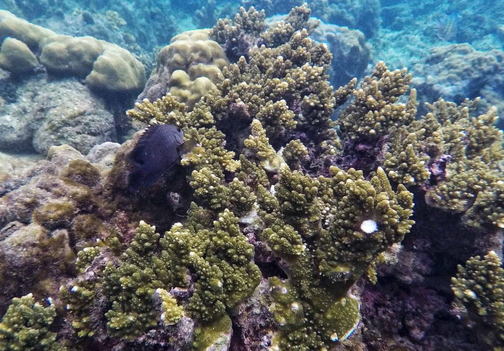 island hopping el nido snorkeling