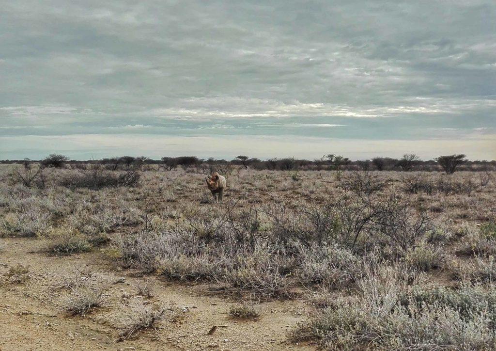 namibia safari etosha