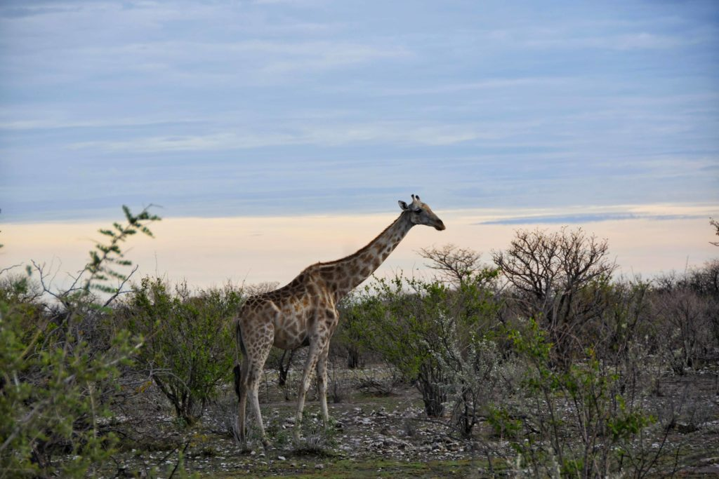 safari all'etosha national park
