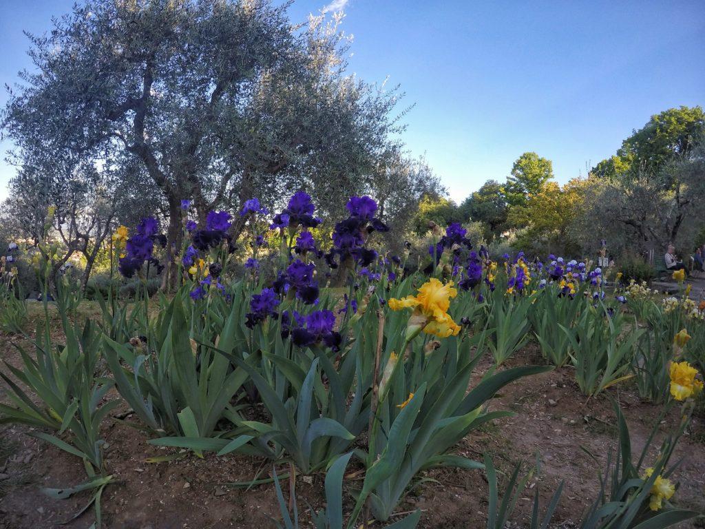 giardino dell'iris firenze