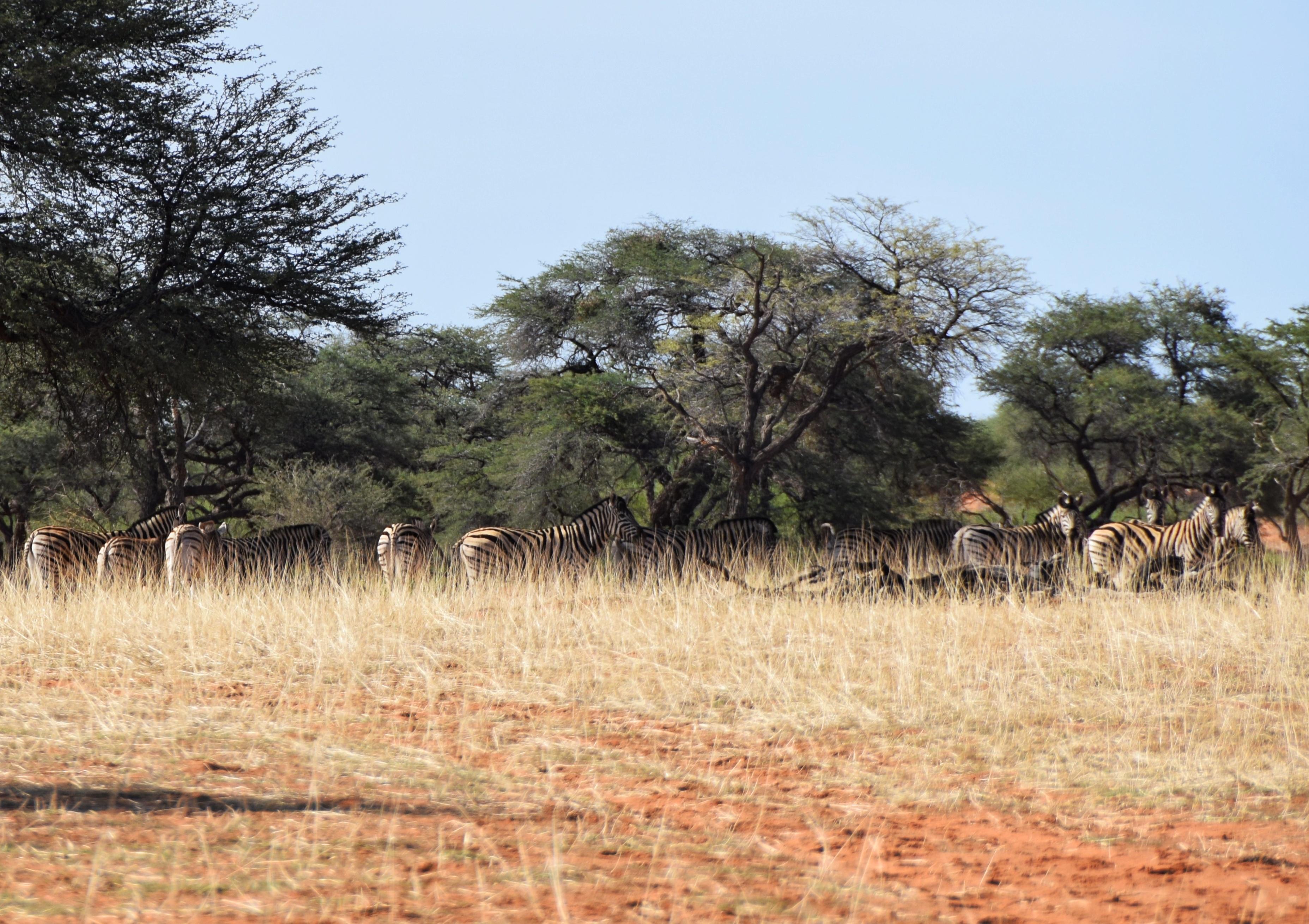 kalahari deserto namibia