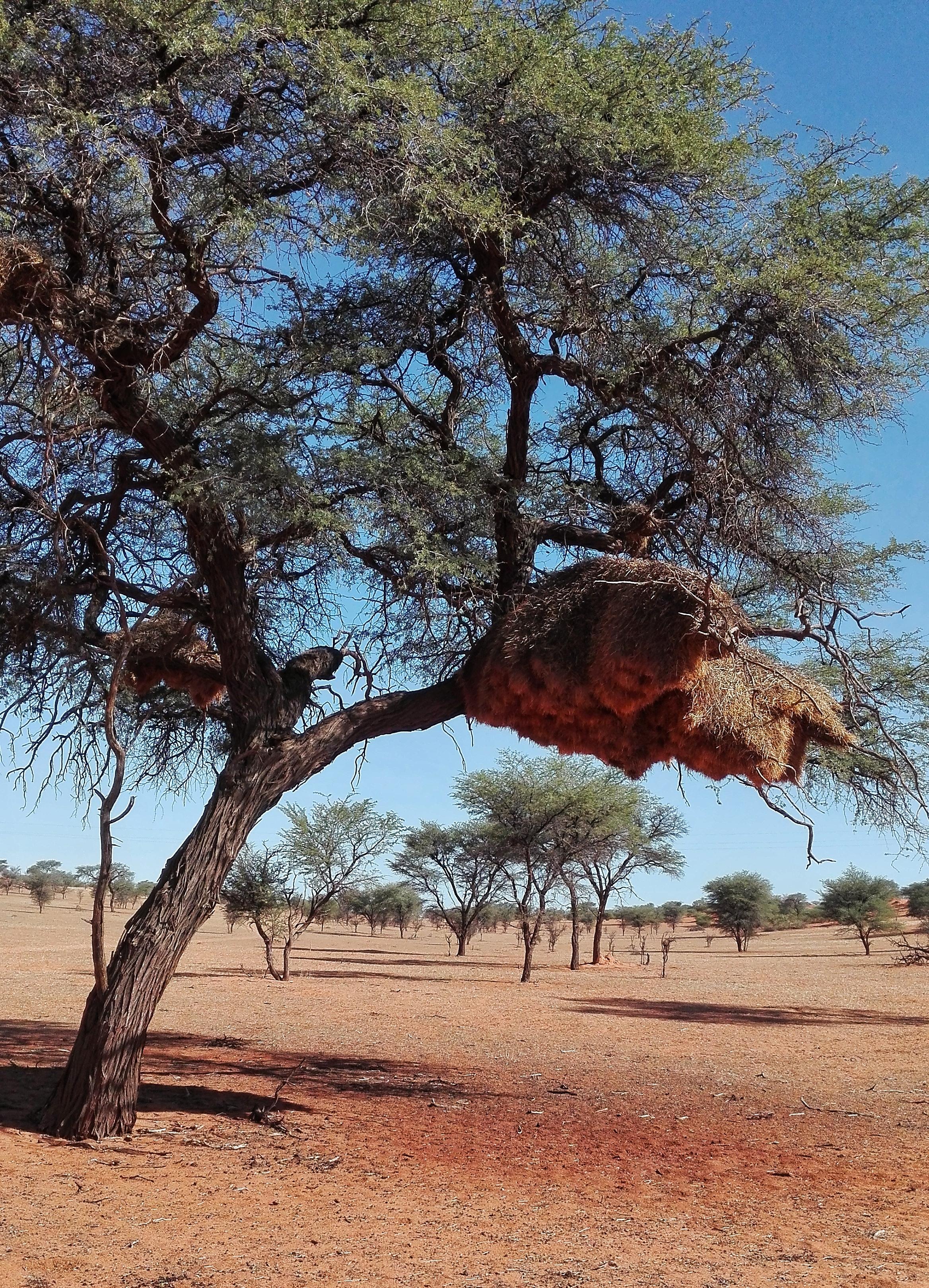 kalahari namibia safari
