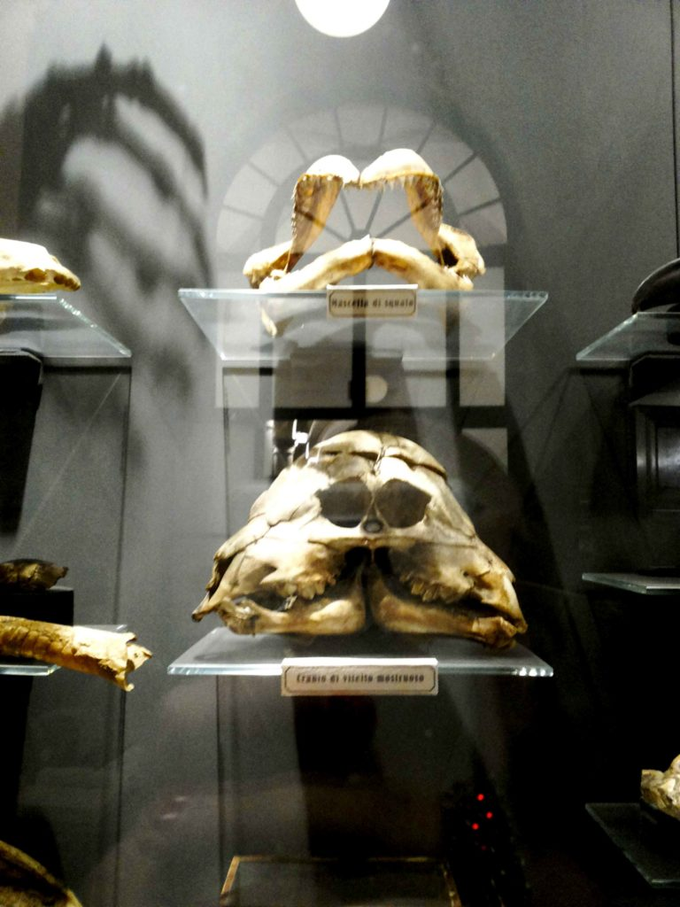 museo di anatomia umana torino