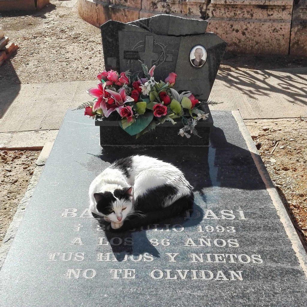 gatto che dorme su una tomba
