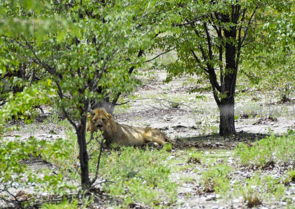 safari etosha national park