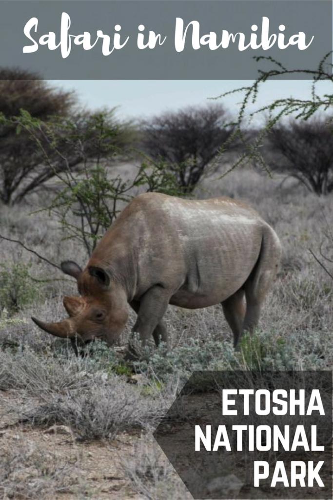 safari etosha namibia